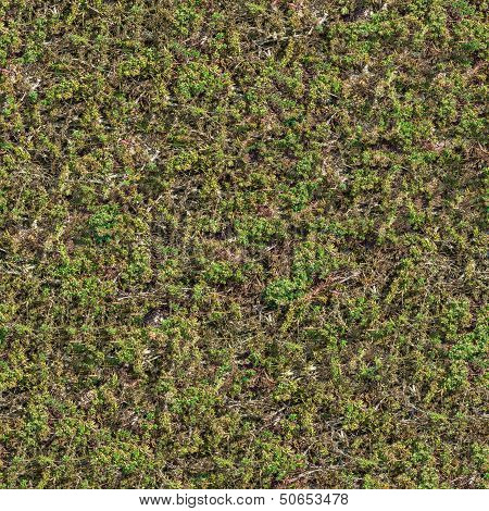 Seamless Texture of Coastal Steppe Vegetation .