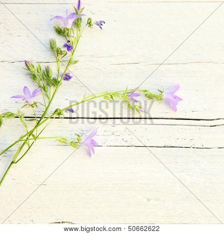 Delicate Summer Floral Background