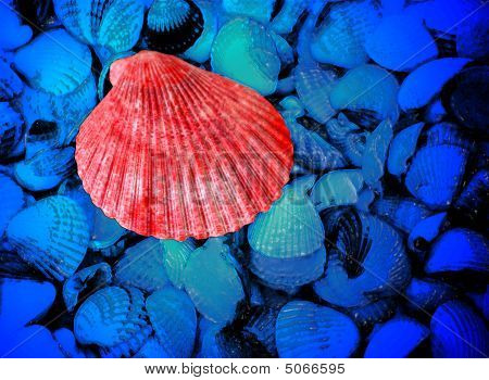 Red And Blue Sea Shells As Background