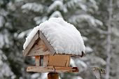 A bird with sunflower seed flying from a wooden bird feeder with snow covering its roof during the W