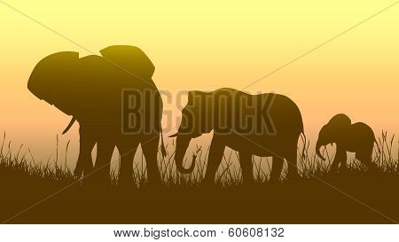 Horizontal Illustration Of Wild Animals In Sunset Savanna.