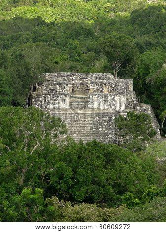 Ancient Temple At Calakmul