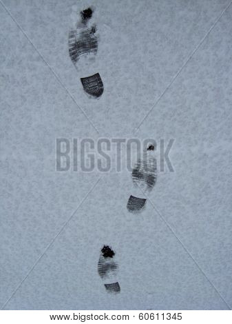 traces of shoe on a snow