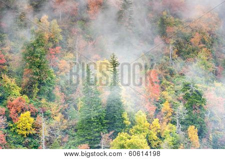 Blue Ridge Southern Appalachian Autumn Foggy Forest