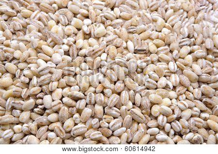 Pearl barley macro close up
