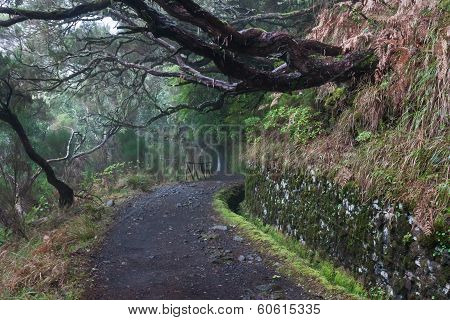 beautiful forests on the island madeira, Portugal, Europe,