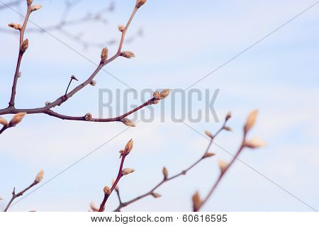 tree budding in the spring