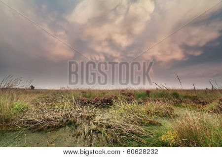 Mammatus Clouds Over Swamp At Sunset