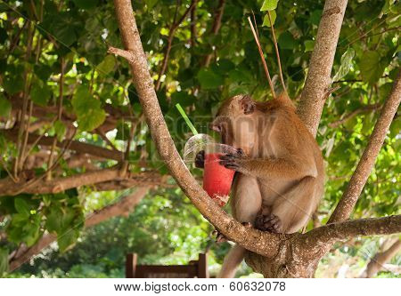 Monkey Eating Strawberry Shake On The Railay Beach.thailand