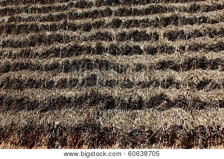 surface of haulm material for house-top