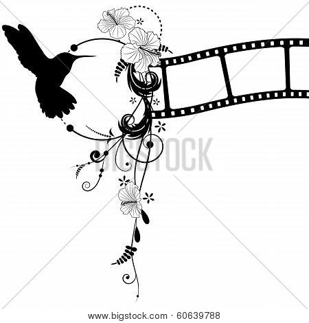 Hummingbird, Hibiscus And Filmstrip