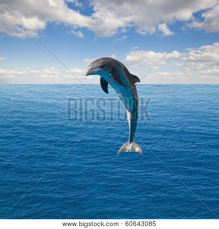 single  jumping dolphin