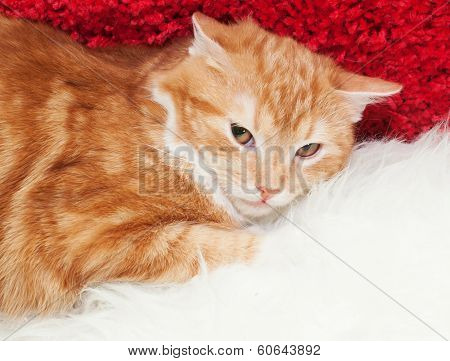 Small Red Kitten With Yellow Eyes Lying, Squinting