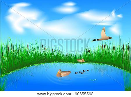 Lake And Ducks