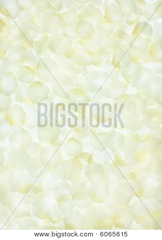 White Rose Petals Background