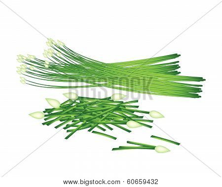 Fresh Flowering Garlic Chives On White Background