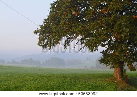 Foggy Landscape in Holland