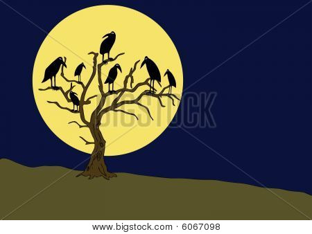 ravens on the rampike at night