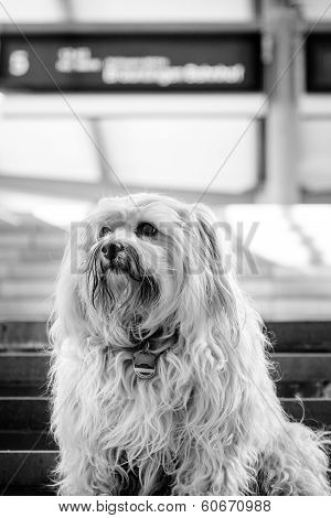 Dog At The Train Station