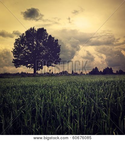 Dark Landscape with Lonely Tree and Moody Sky