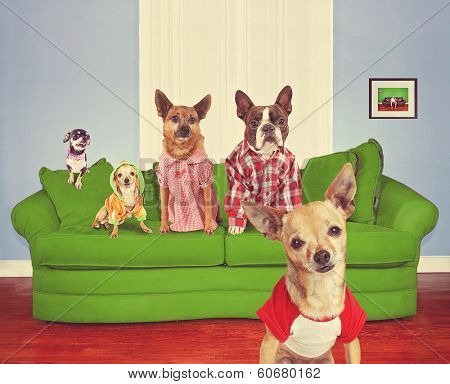 a bunch of dogs sitting on a couch posing for the camera