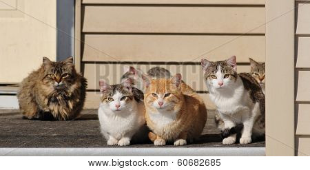 Cats sitting on the porch
