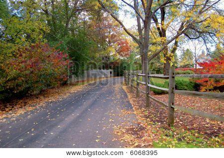 Autumn Colors Line A Driveway