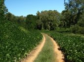image of kudzu  - Road covered in Kudzu vines in the south - JPG