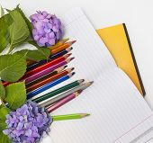 picture of hydrangea  - Flowers hydrangeas and school subjects - JPG
