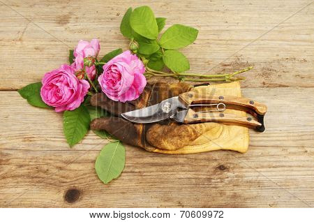 Roses And Gloves