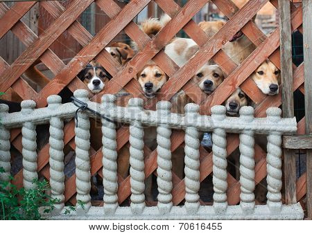 Dog muzzles in cells of a wooden protection