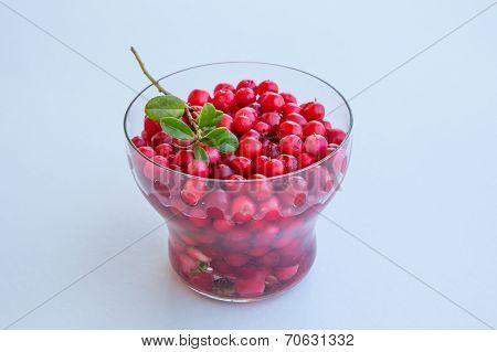 Fresh Organic Cranberry