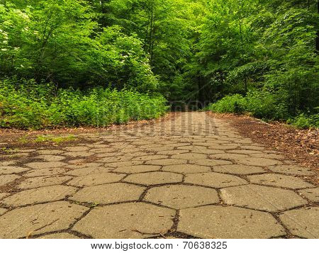 Sidewalk Walking Pavement In A Park Or Forest