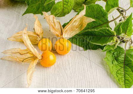 Physalis Fruit Closeup