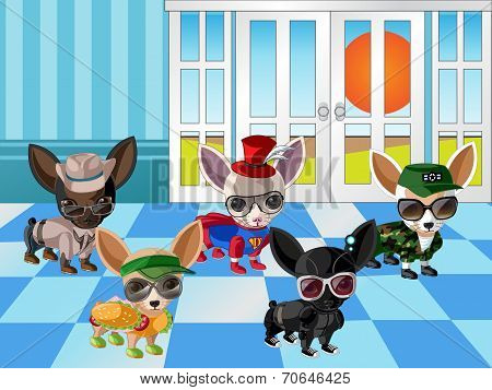 Chihuahua Dogs with Dress up 2