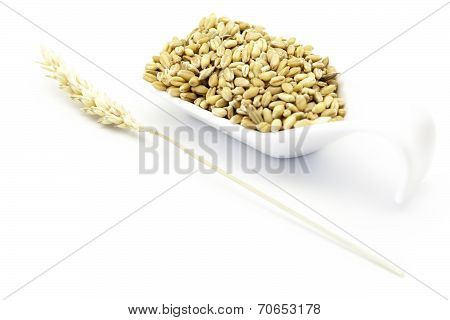 Wheat Grains And Wheat Sprig