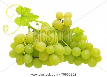 Green grape isolated on white background.