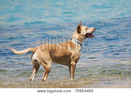 Dog playing in the water