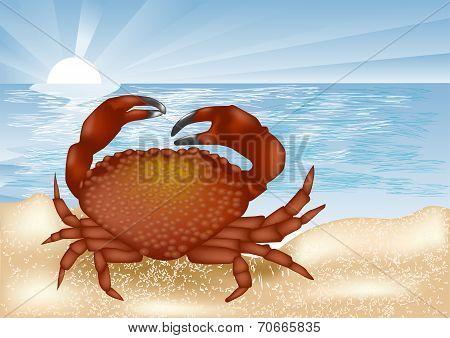 Crab At Sea