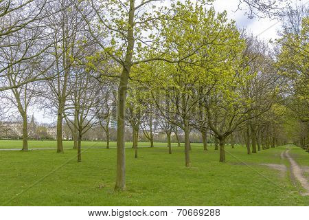 Trees In Regent's Park, London