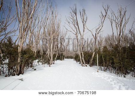 Lake Mountain Trail