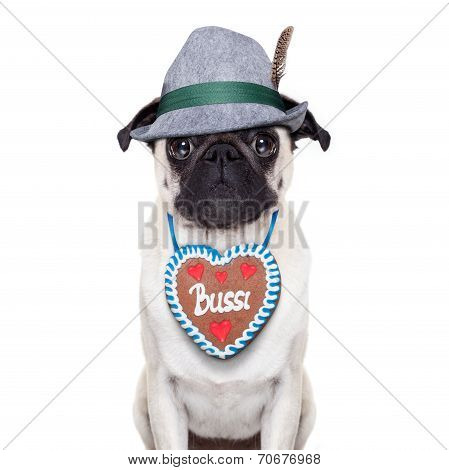Bavarian Pug Dog