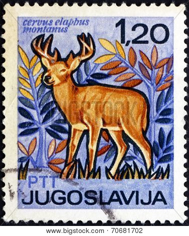 Postage Stamp Yugoslavia 1967 Red Deer