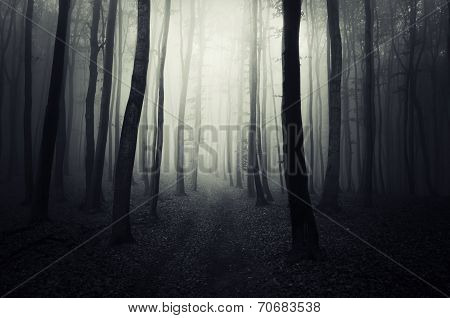 Path trough the dark forest