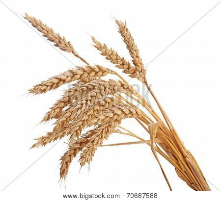 Wisp Of Wheat