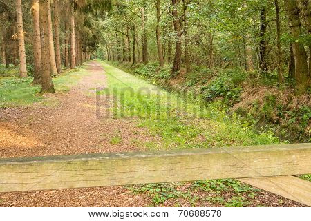Path Along Ditch In Woods