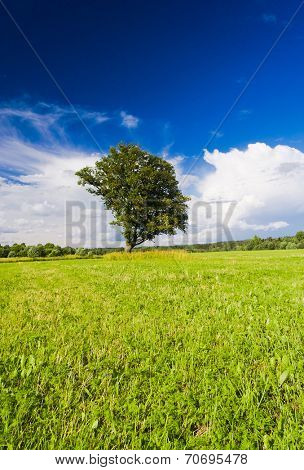 Lonely Tree Grass Land