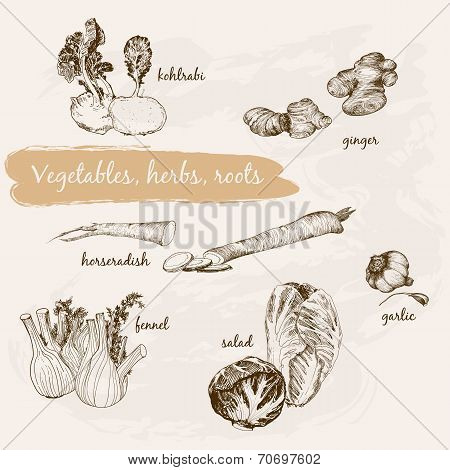 Vegetables, Herb And Roots