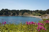 stock photo of mendocino  - A panoramic view of a bay in Mendocino - JPG