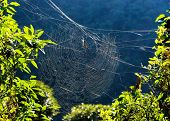image of orbs  - Golden orb weaver spider on its web in Nepal - JPG